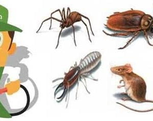 Hamam Böceği İlaçlama İçin En Doğru Firma